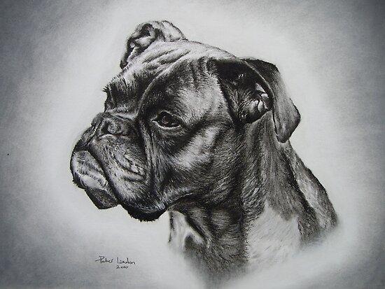 Boxer Dog by Peter Lawton