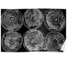 Pattern of Mushroom Caps Poster