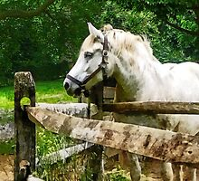 White Horse Looking Away by Susan Savad