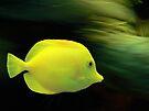 Yellow Fish by Gisele Bedard
