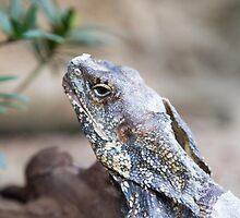 Frilled lizard by pASob-dESIGN
