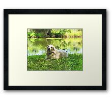 Yellow Lab by Lake Framed Print