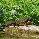 Two on a log  by Karen  Moore