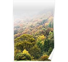 Autumnal colored woods  Poster