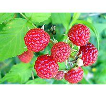 Berry Sweet Photographic Print