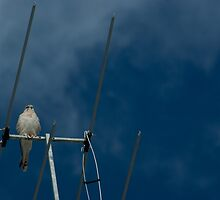 Bird on a Wire by Gillian Berry