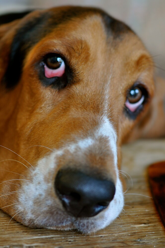 Those Eyes... by Ainsley Kellar Creations
