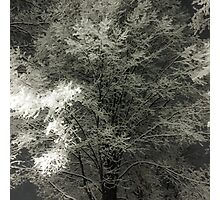 Winter Tracery Photographic Print