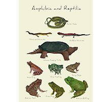 Amphibians and Reptiles Photographic Print
