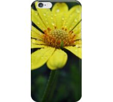 Raindrops on Daisy iPhone Case/Skin