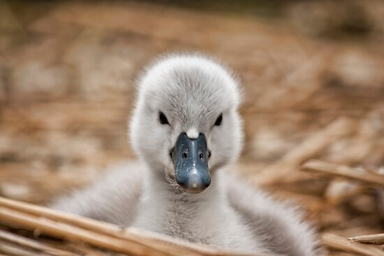The Little One by Val Saxby