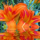 Orange Beauties by starlite811