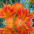 Orange Beauties by starlite811