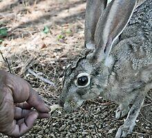 Hand-feeding Jill 1 by Lenny La Rue, IPA