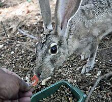 Hand-feeding Jill 3 by Lenny La Rue, IPA