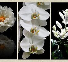 Black and White Triptych by Judy Vincent