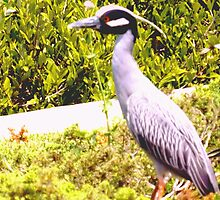Night heron by the seawall by ♥⊱ B. Randi Bailey