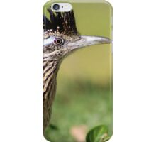 Roadrunner early morning hunt iPhone Case/Skin