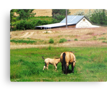 I Love Country Life Metal Print