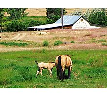 I Love Country Life Photographic Print