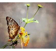 Vintage Butterfly Photographic Print