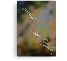 Grass Grains' Completion (View Large) Canvas Print