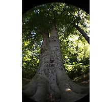 Dads tree Photographic Print