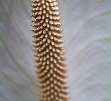 Obake Flower  by Vince Gaeta