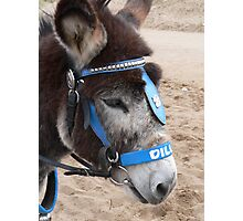 Donkey  Photographic Print