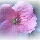 Baby Pink by sarnia2