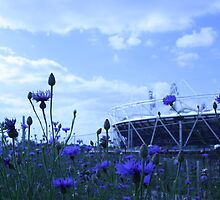 olympic cornflowers by Kezzer