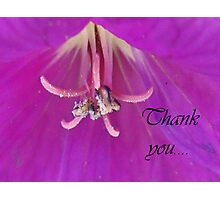 Lilac Notes Photographic Print