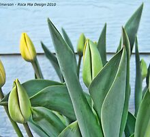 Yellow Buds by rocamiadesign