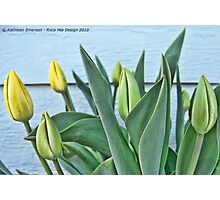 Yellow Buds Photographic Print