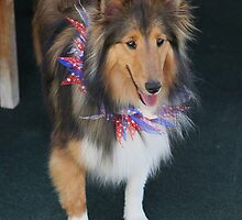 Maggie is already for the Fourth of July..... by DonnaMoore