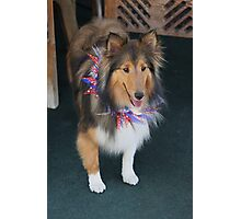 Maggie is already for the Fourth of July..... Photographic Print