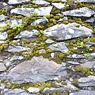 Mossy wall, Dingle peninsula, Ireland by nealbarnett