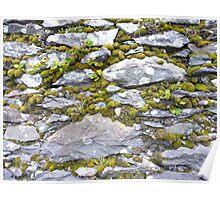 Mossy wall, Dingle peninsula, Ireland Poster