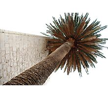 Palm Tree Near Church Wall Photographic Print