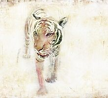 Eye of the Tiger by Susan Werby