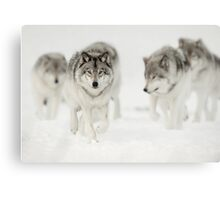 Timber Wolves Canvas Print