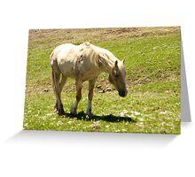 """Cloud on Hight""- Pryor Mountain mustangs Greeting Card"