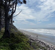 Beach #1 on the Olympic Peninsula by Lucinda Walter