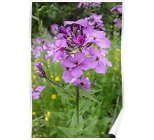 Purple Flowers Poster