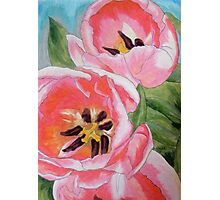 Deep Pink Poppies Photographic Print