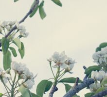 Pear blossoms Sticker