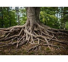 Roots of Life Photographic Print