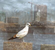 A Seagull Pose by Susan Werby