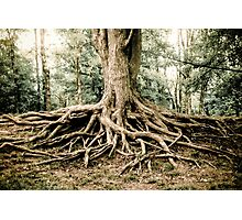 Tree of life II Photographic Print
