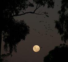 Moonlit night, Melrose, S.A. by elphonline